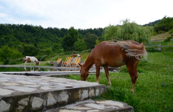 Natur und Idylle verbunden mit Tieren, einem Pool und Quads bietet Milomir Petrovic den Besuchern seiner Farm Kolibia.