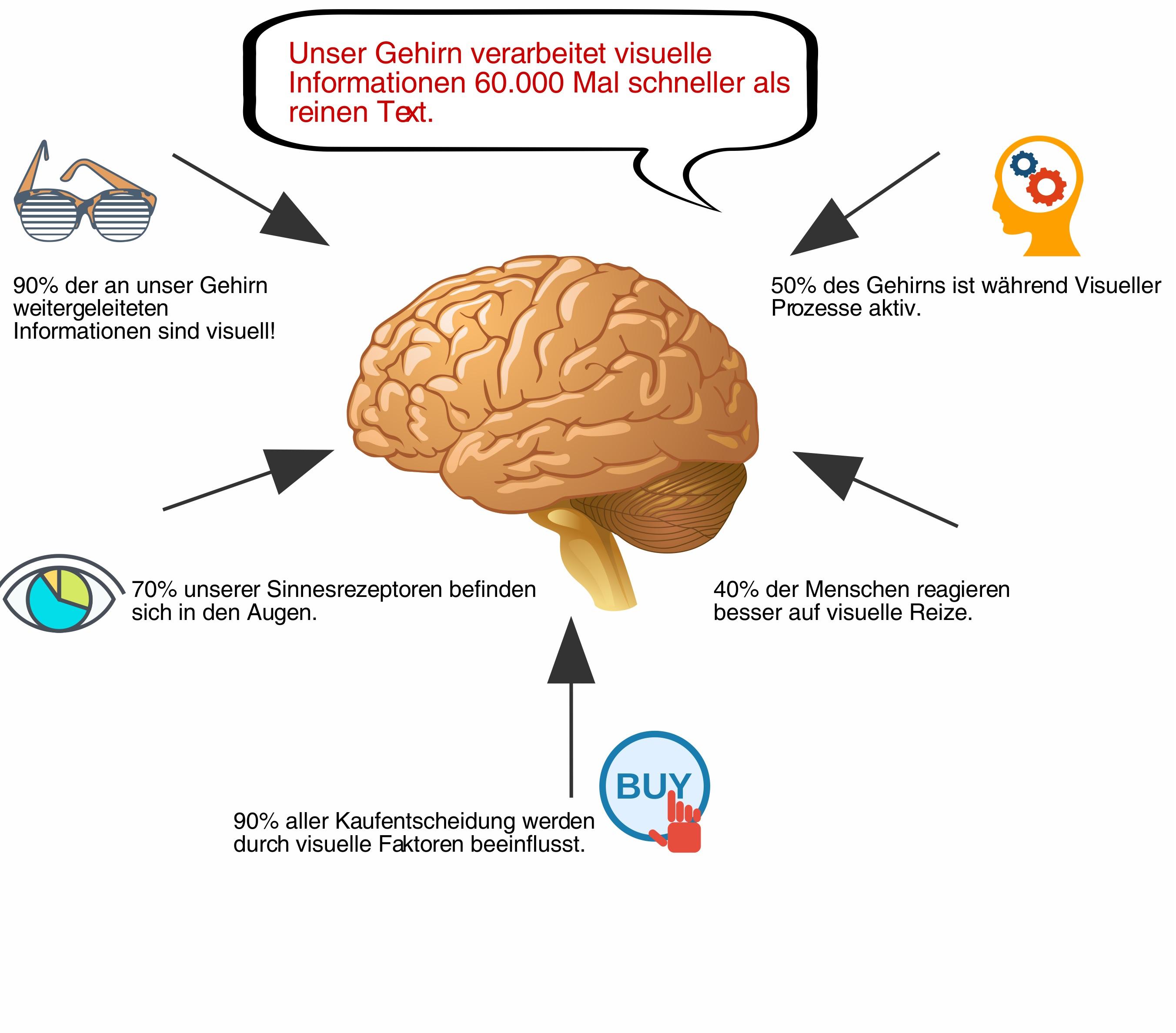 Tolle Markierte Diagramm Des Gehirns Mit Den Funktionen Ideen ...